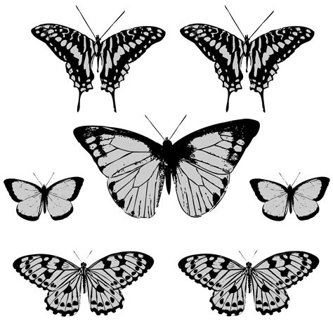 free clipart pictures butterfly clipart free stock photo domain pictures