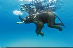 le elefant l orque est un 233 l 233 phant de mer