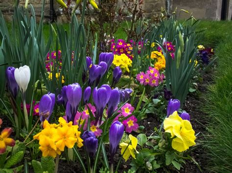 spring garden ideas 5 tips for a better spring flower garden