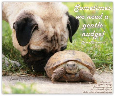 pug turtle pug and turtle turtles