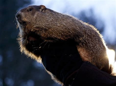 groundhog day events woodstock s groundhog days schedule of events