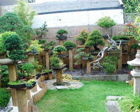 bonsai garden backyard images