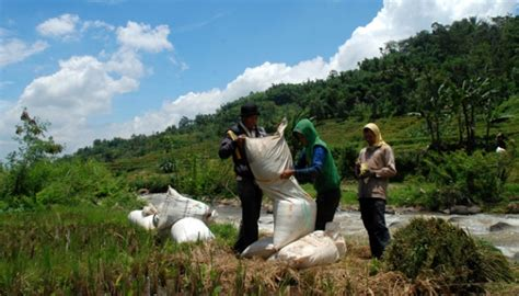 Ukuran Karung Beras Bulog jaga harga beras bulog serap gabah petani bisnis tempo co