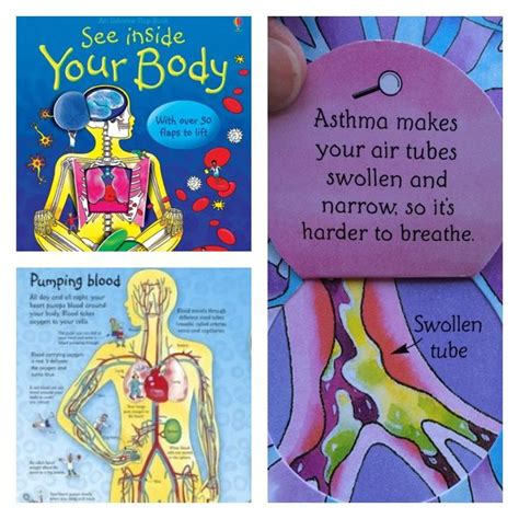 See Inside Your see inside your lift the flap usborne educational