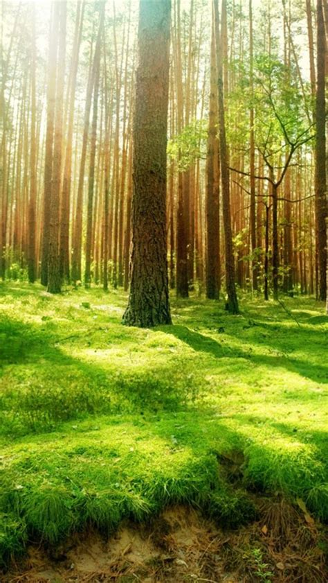 wallpaper iphone forest free hd wallpapers for desktop forest and sunshine iphone