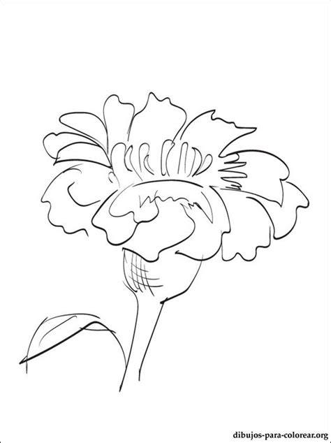 free coloring pages of marigold flower