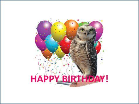 happy birthday bird images bird singing happy birthday