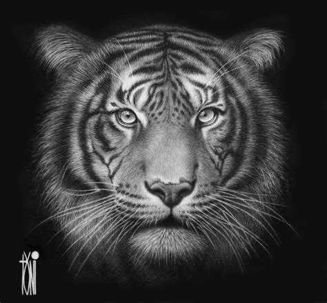 beautiful tiger animals paintings favourites by anyzamarah on deviantart