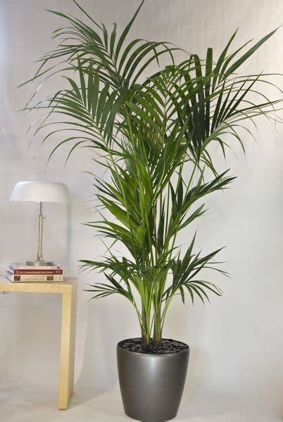 biggest house plants neutradecor plantas de interior resistentes