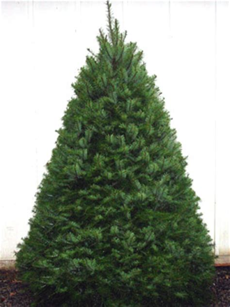 name this christmas tree popsugar home