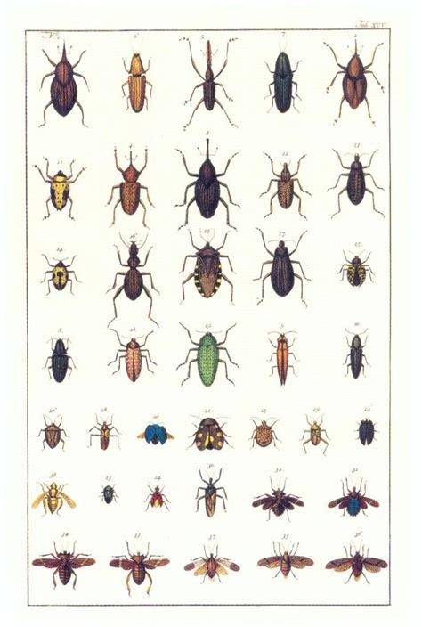 seba cabinet of natural curiosities em portuguese do brasil libro gratis descargar natural curiosities from the cabinet of albertus seba weevils beetles and aculeate
