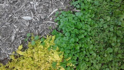 backyard full of weeds 100 backyard full of weeds best 25 garden weeds ideas on pinterest weeds in