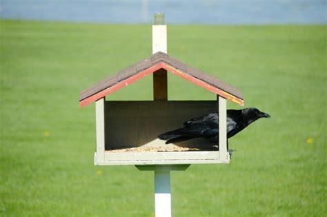 keeping blackbirds out of bird feeders thriftyfun