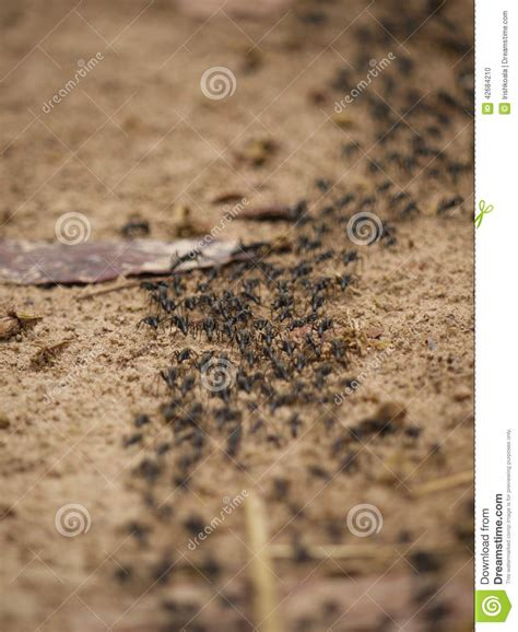 Chasser Les Mites by Comment Chasser Termites