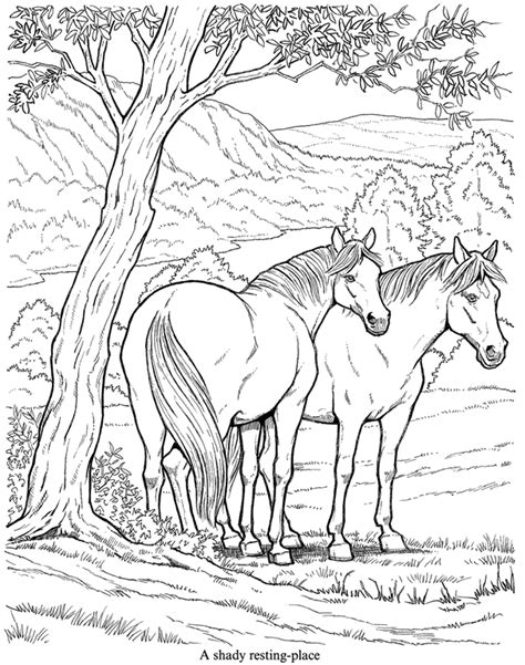 Coloring Pages Of Horses And Foals by And Foal Coloring Pictures
