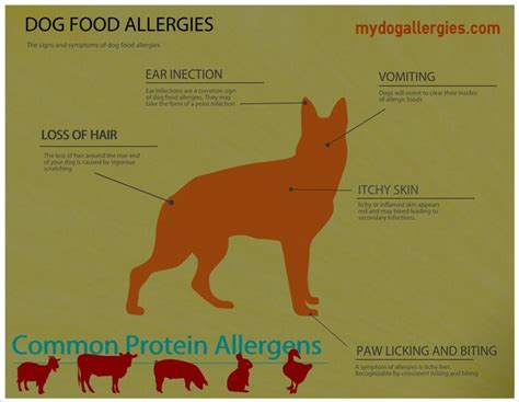 allergy symptoms in dogs 42 best images about allergies on for dogs pets and oregano