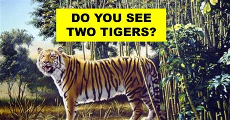 tigers   picture   spot