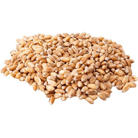buy wheat berries from foodtolive com free shipping no tax