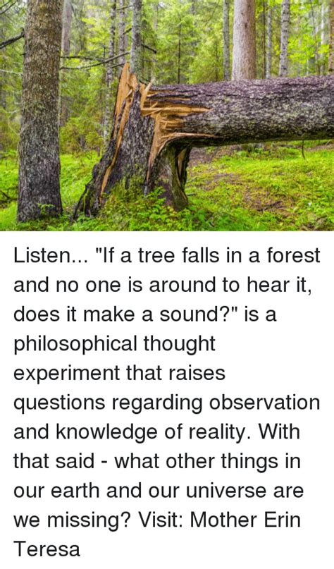 if a tree falls in the forest on the border between the deaf and hearing worlds books listen if a tree falls in a forest and no one is around to