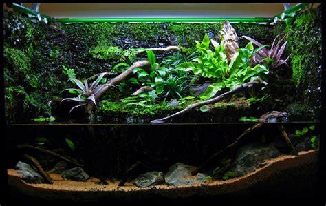 15g Paludarium   The Planted Tank Forum