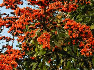 list of state flowers list of indian state flowers