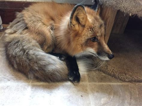 unknown exotic animal sanctuary and rescue in illinois
