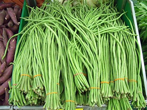 best vegetable seeds top 10 best asian vegetable seeds top reviews no place