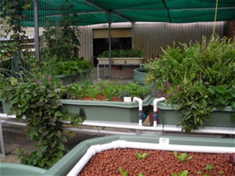 Backyard Brechin Opening Times Sistem For Aquaponic Backyard Aquaponics Opening Hours Info