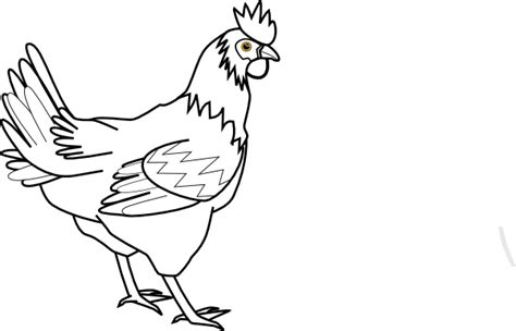 Hen Outline Drawing