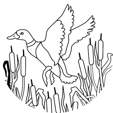 ducks draw baby coloring pages print coloring