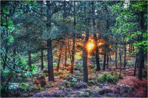 garten bäume die 77 besten wald hintergrundbilder