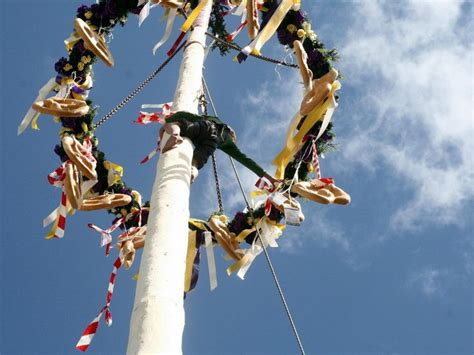 A Maibaum Of Your Own by 17 Best Images About Maifest On Floors