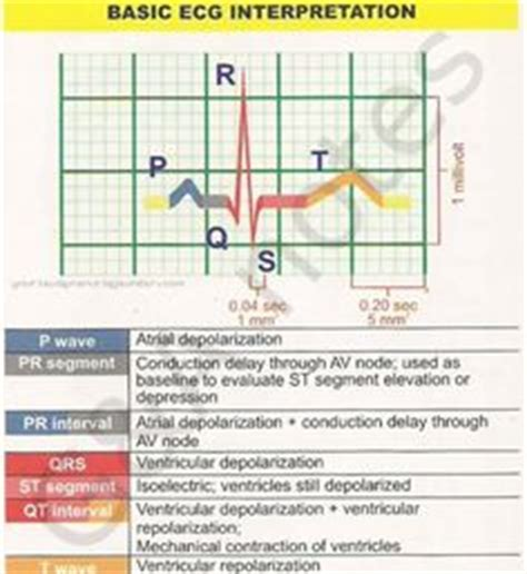 easy essential chemistry unlock the healing potential of essential oils books 1000 images about ekg class on physiology