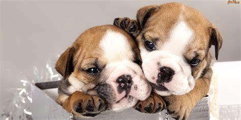 new year your animal pies dwa s蛯odkie szczeniaczki
