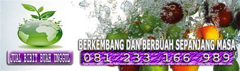 Bibit Buah Mangga Emperor jual bibit buah bibit buah agrobisnis trubus