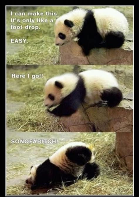 Funny Panda Memes - funny panda meme smiles giggles pinterest