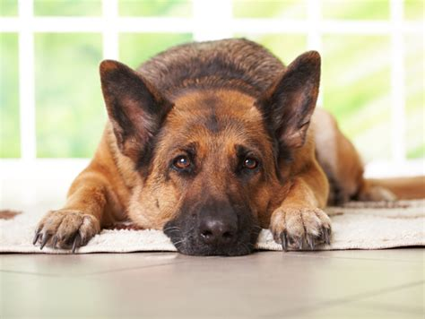 Nice pictures of different types of dogs including