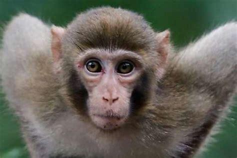 film kartun gajah dan monyet gila pasangan miliuner ini wariskan hartanya ke monyet