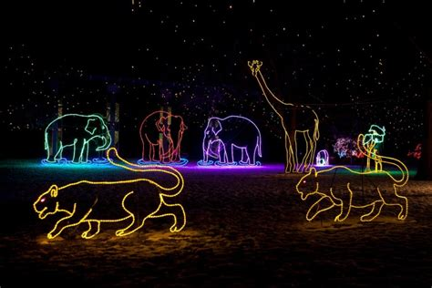 zoo lights colorado 11 of the best colorado light displays