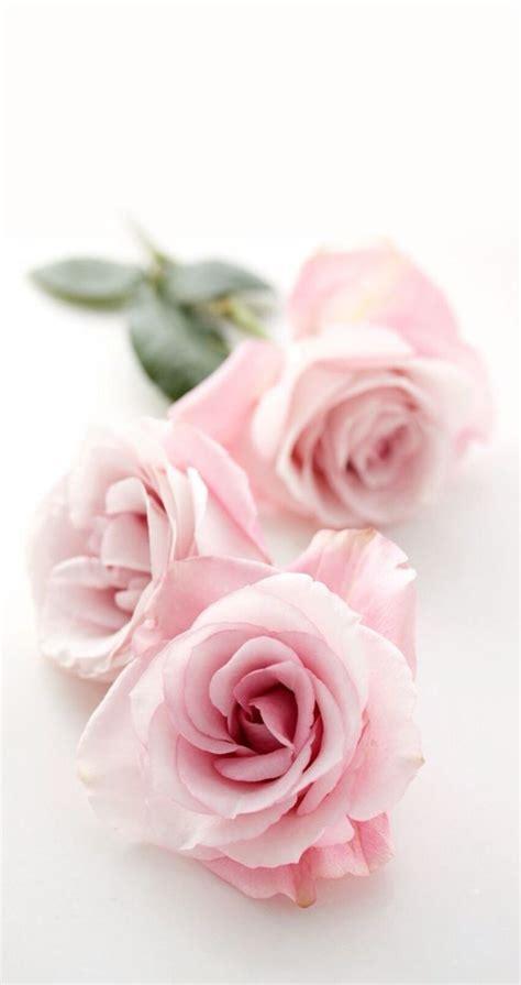 iphone wallpaper hd rose best 25 pink flower wallpaper ideas on pinterest pink