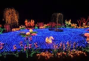 Bellevue Botanical Garden Lights Bellevue Botanical Gardens Lights Memes