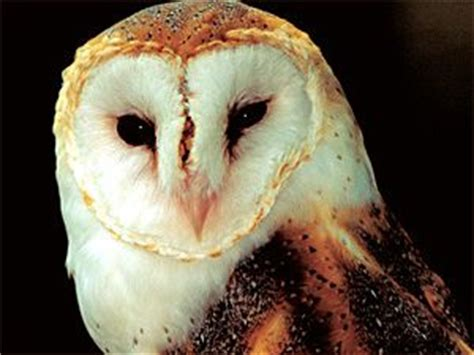 owl symbolism pure spirit 25 best ideas about animal totems on pinterest what do