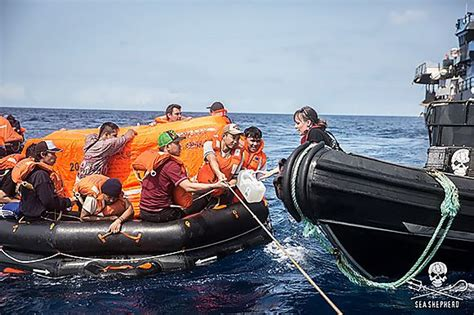 joyride south africa whale watching boat sinking 2014 no whale wars here sea shepherd rescues crew of fish