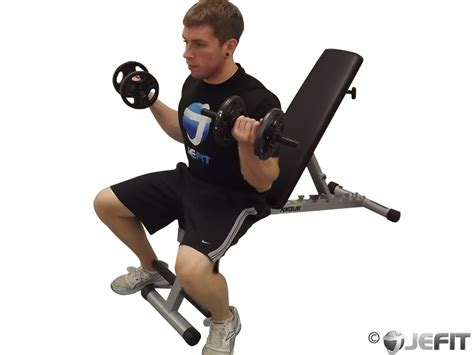 seated dumbbell curl dumbbell seated curl exercise database jefit best