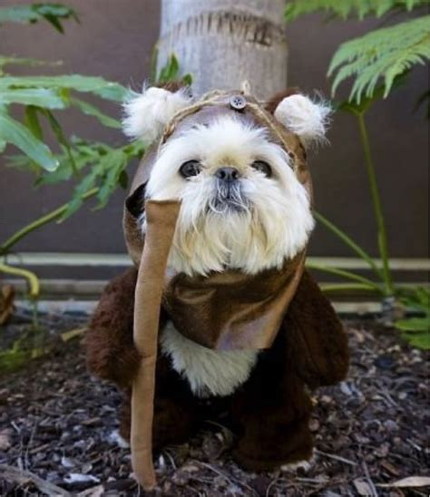 ewok costume for ewok costumes for dogs pet pics