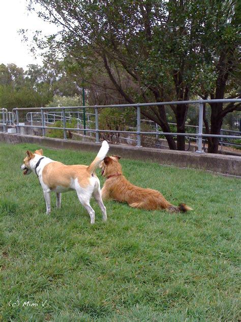 free puppy classes free classes city of sydney sydney