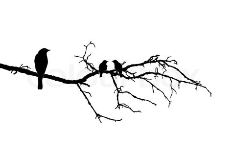 vector silhouette of the birds on branch stock vector