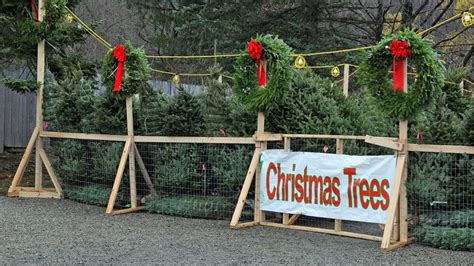buy christmas trees to sell how to sell trees cool springs nursery