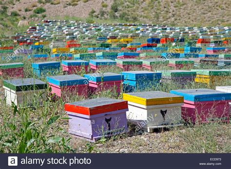 how to have a beehive in your backyard how to have a beehive in your backyard outdoor goods