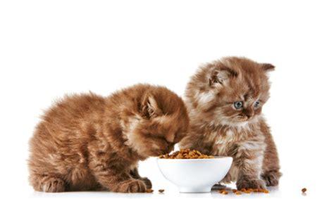 le crocchette farmina n d grain free per gatto